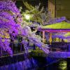 自称・フォトグラファーが行く。太田市八瀬川ソメイヨシノのライトアップ。幻想的な光景。そして