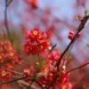 自称・フォトグラファーが行く。群馬フラワーパーク。春の花と木々たち