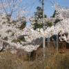 自称・フォトグラファーが行く。ドイツ村クローネンベルクと千本桜の意外な関係